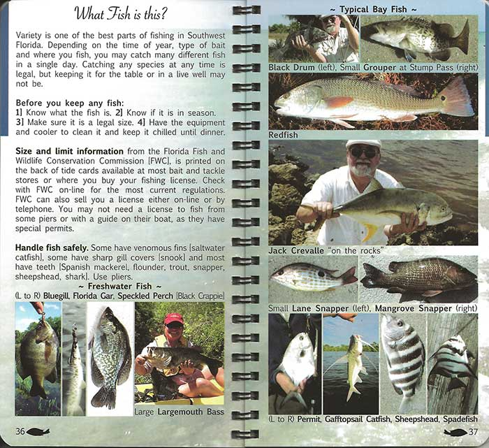 Fishing Seasons and Species Chart for Southwest Florida